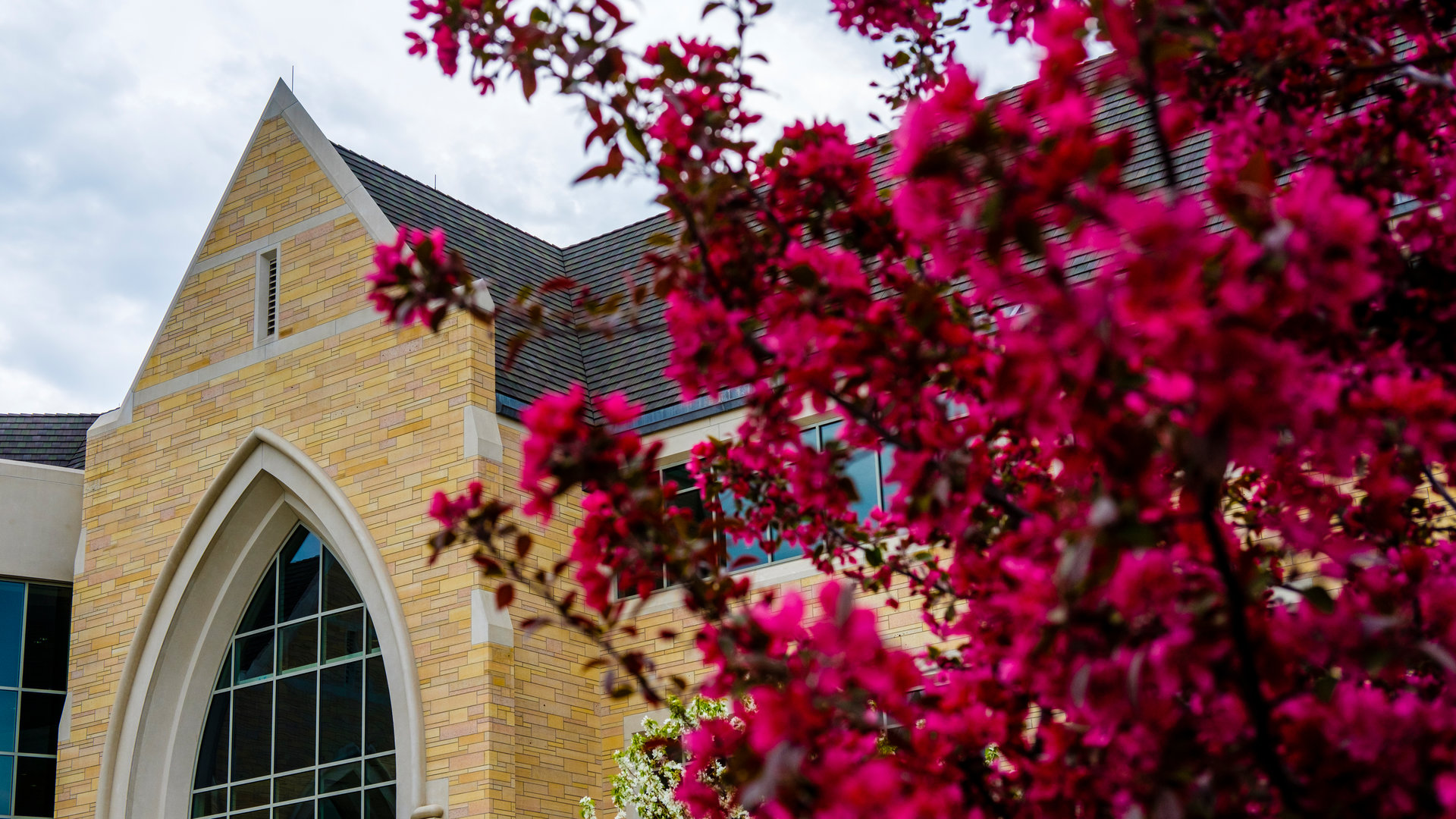 flowers bloom on campus during spring